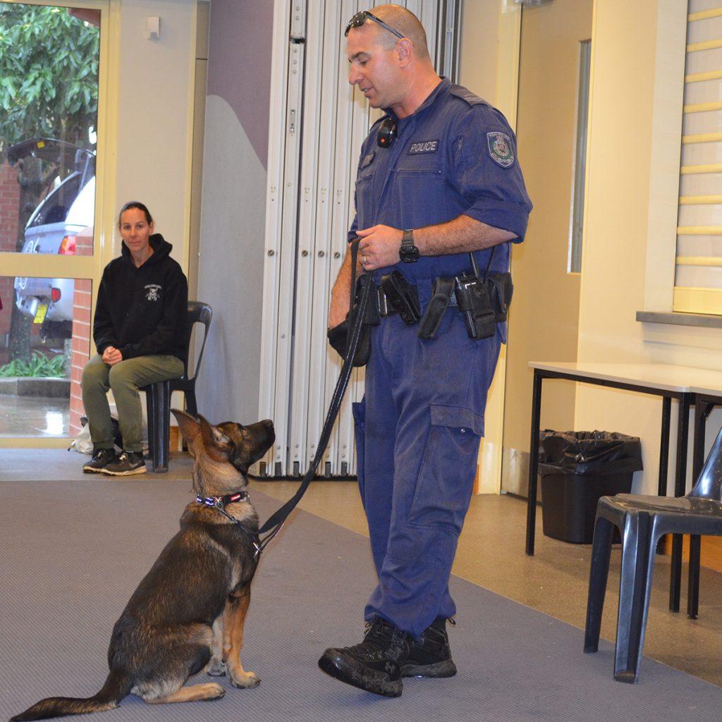 Trainee Police Dog Yogi
