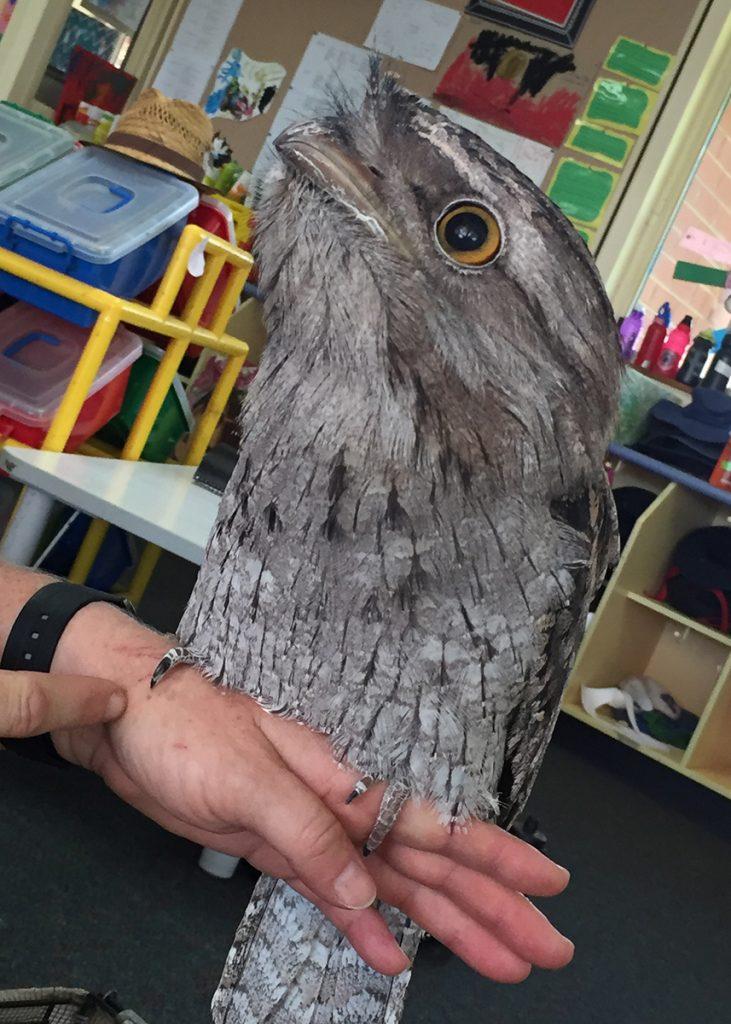 ELC Owl