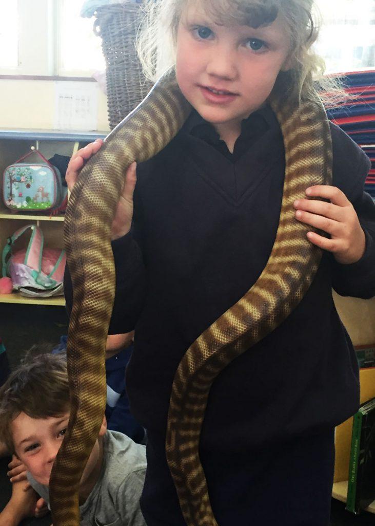 ELC-Wildlife-blue-tongue.snake